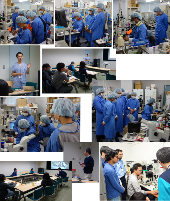 The Basic Veterinary Externship at RIKEN BRC
