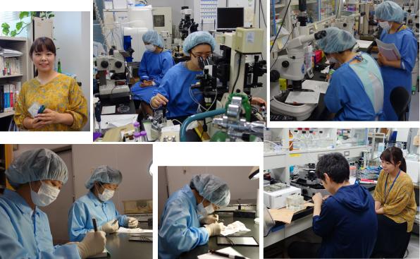 An Internship for Tsukuba Univ. Graduate Student