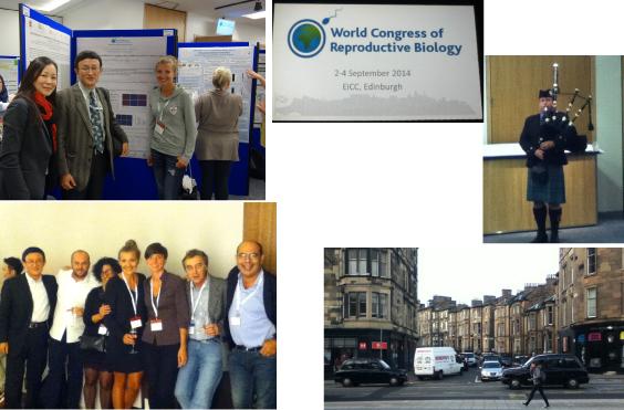 World Congress of Reproductive Biology, Edinburgh, U.K.
