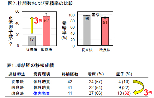 図2:排卵数および受精率の比較 表1:凍結胚の移植成績